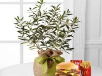 Olive trees Macdonald Grooa article